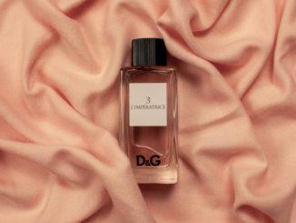 Seductive perfumes to attract guys